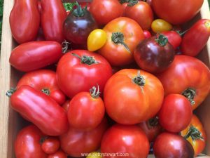 tomatoes-wide-watermarked