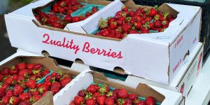 strawberry baskets