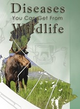 Diseases You Can Get from Wildlife