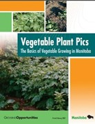 Vegetable Plant Pics